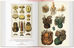 Picture of Seba. Cabinet of Natural Curiosities