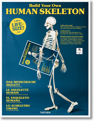 Изображение Build Your Own Human Skeleton – Life Size!