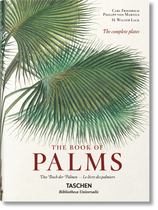 Изображение Martius. The Book of Palms