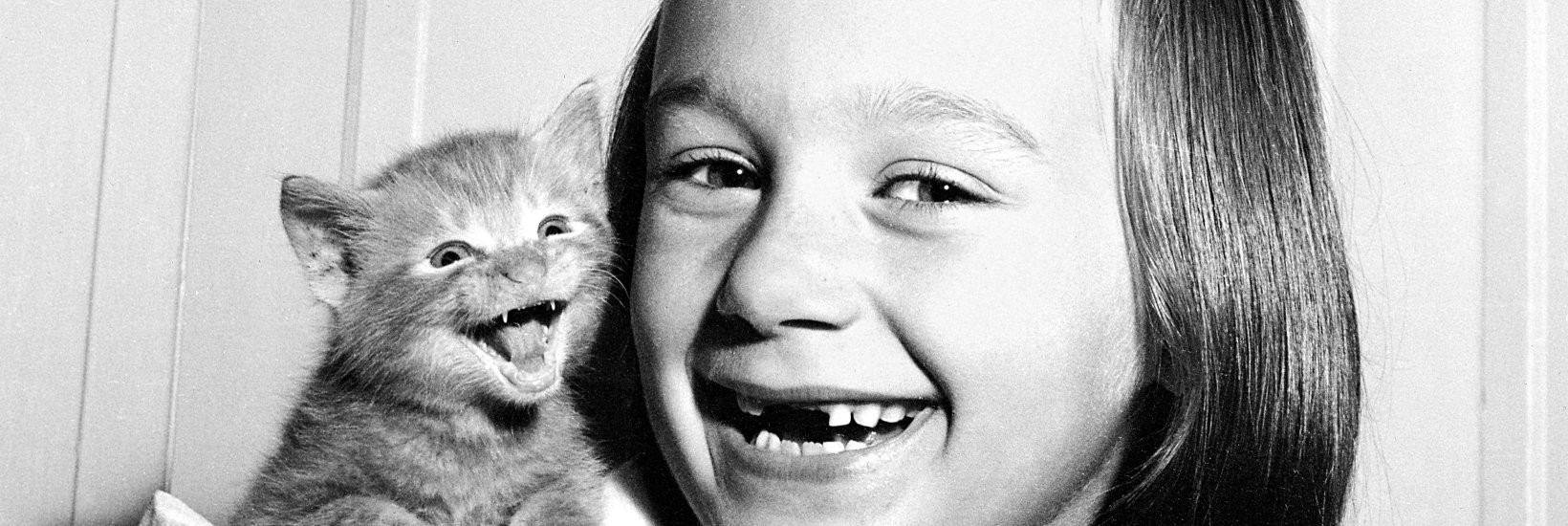 Picture of Walter Chandoha. Cats. Photographs 1942–2018